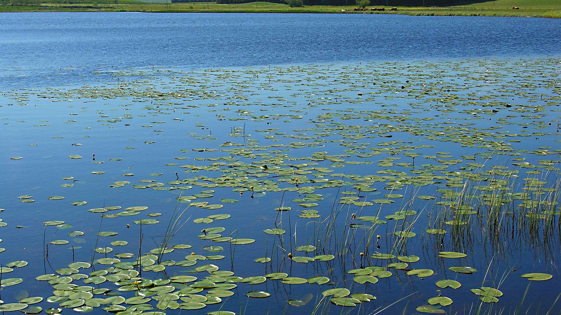 lac-de-salhiens-aubrac